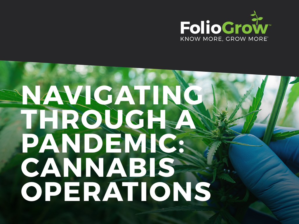 Navigating Through a Pandemic: Cannabis Operations