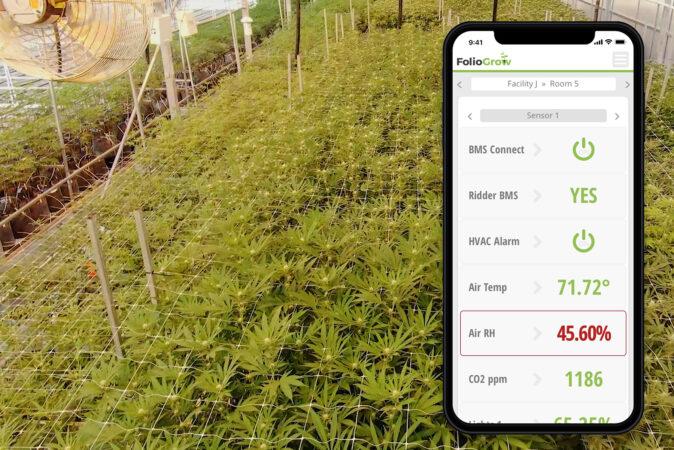 AI In Cannabis Cultivation